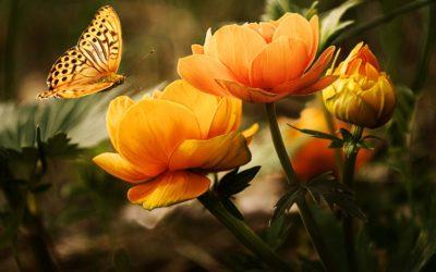 잡초를 뽑고 꽃을 심다 떠난 사람